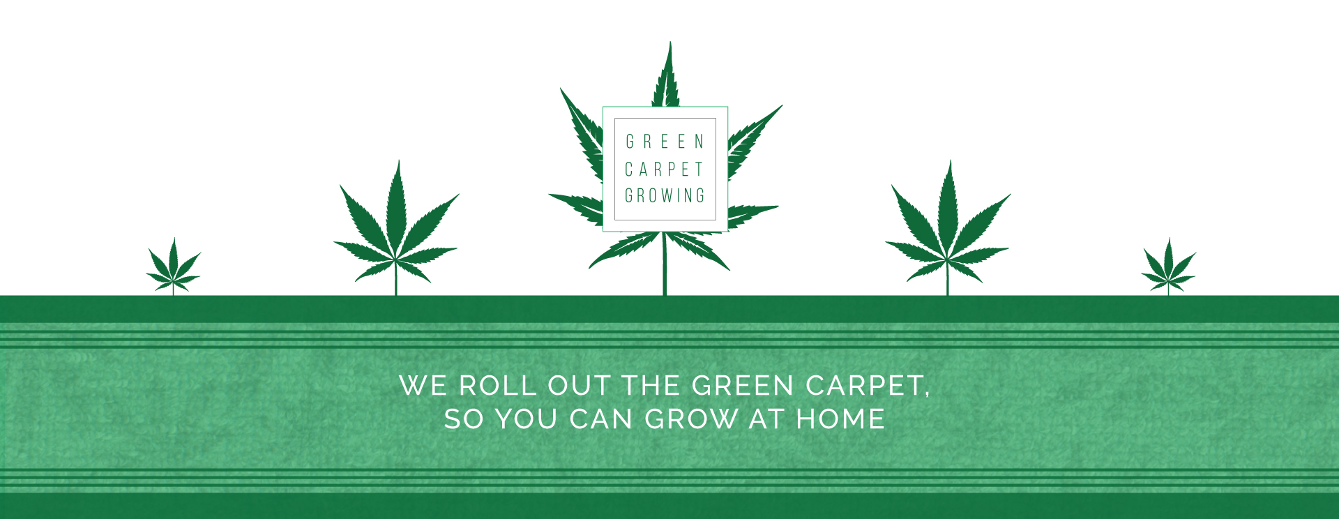Green carpet growing learn how to grow marijuana plants at home nvjuhfo Image collections