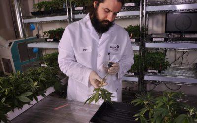 New Cannabis Strains 2019