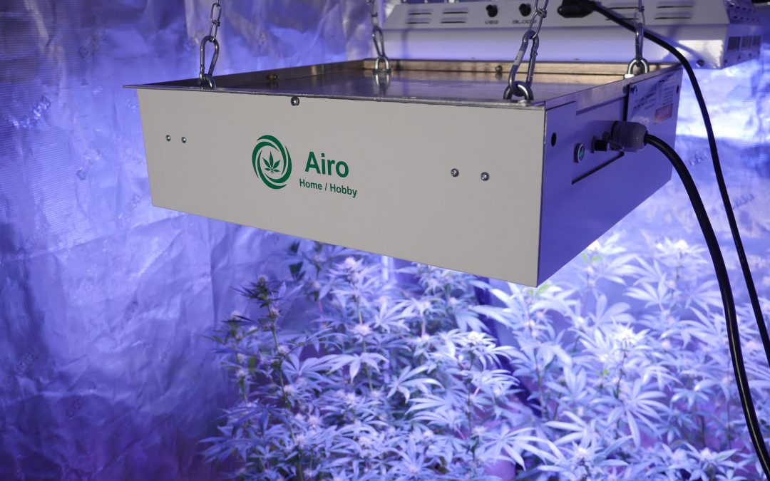 Stop powdery mildew on cannabis with modern technology